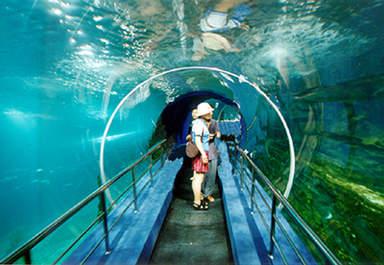 Подводный туннель в Пекинском аквариуме