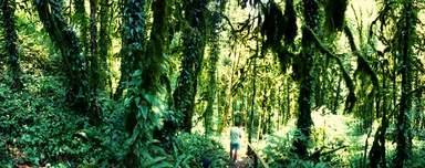 Сказочный субтропический лес