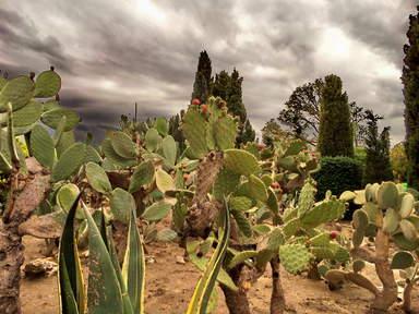 Разнообразие кактусов