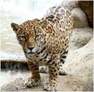 Фауна Коста-Рики