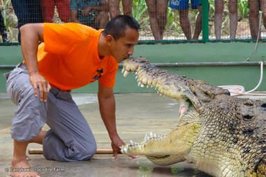 Крокодиловый парк