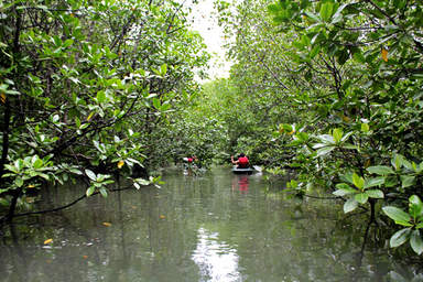 Мангровые леса острова Лангкави