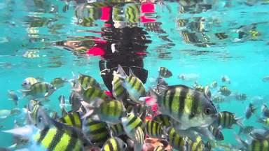 Морской парк Пулау Пайар