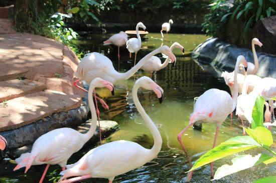 Парк птиц и животных