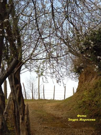 Природа Сарпи
