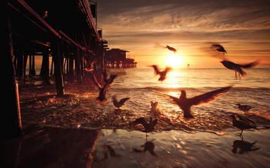 Птицы у старого пирса в Санта-Монике