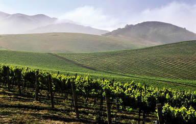 Виноградники в долине Санта-Инес