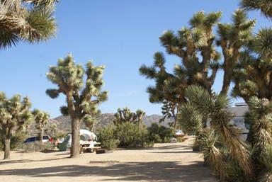 Деревья Джошуа в парке Деревьев Джошуа