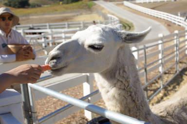 Животные на ранчо