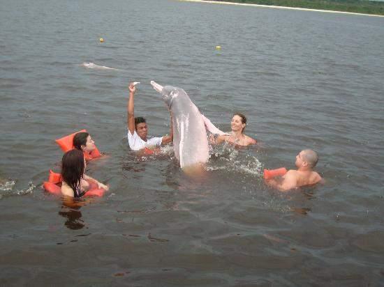 Кормление розового дельфина