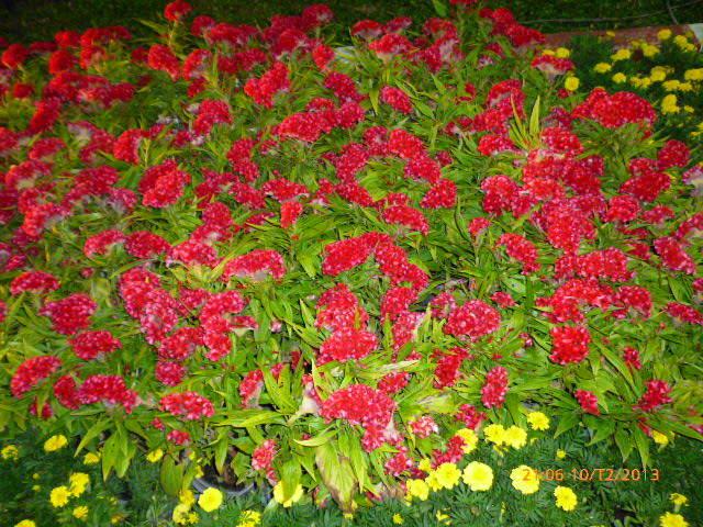 Цветы в ботаническом саду Хошимина