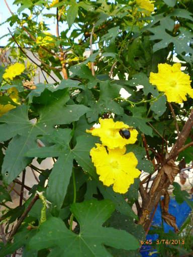 Ботанический сад в Хошимине