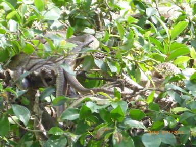 Ферма - зоопарк змей Донг Там