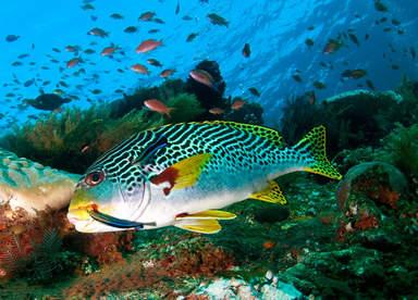 Морская красавица