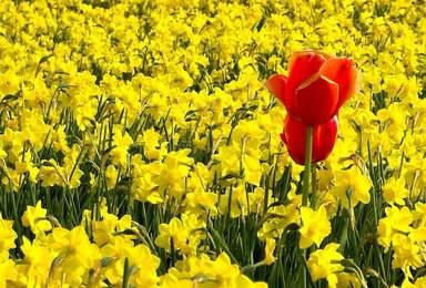 Красное и жёлтое