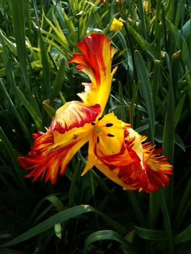 Цветочная экзотика