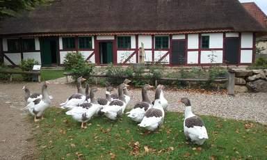 Датская деревня. Один из старинных домов