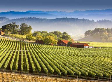 Виноградники в Долине Напа
