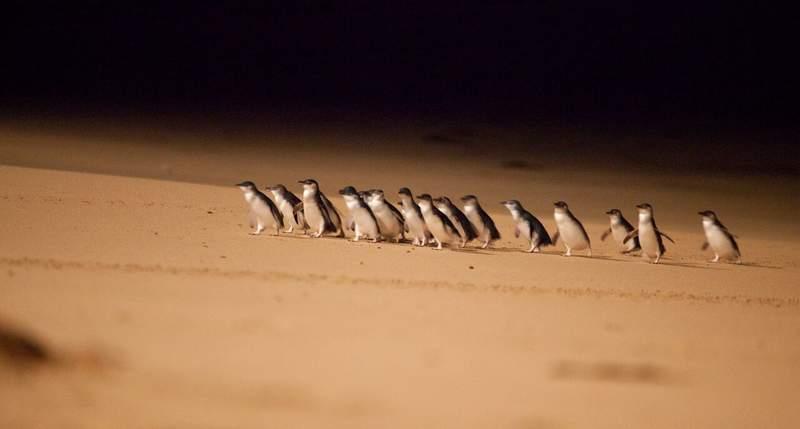 Пингвины на пляже