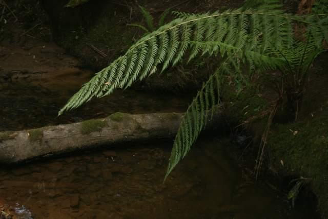 Тропический лес в Данденонге