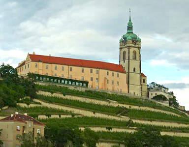 Виноградники на склонах  холма замка  Мельник