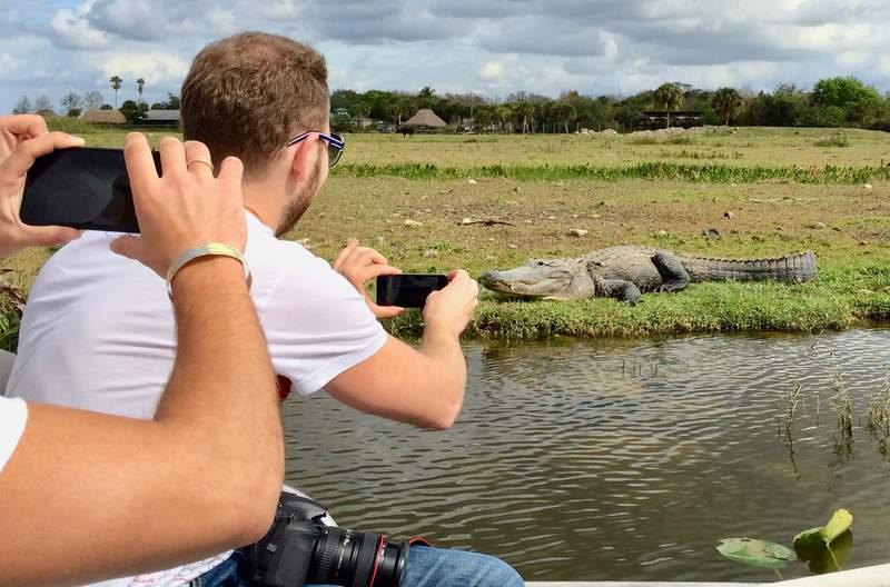 Аллигатор в болотах Флориды