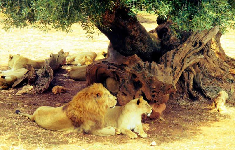зоосафари парк