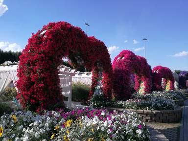 Парк Цветов — Dubai Miracle Garden