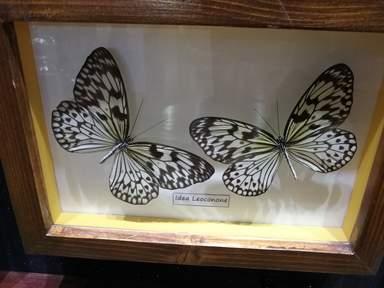 Парк Бабочек в Дубае — Dubai Butterfly Garden
