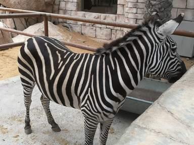 Экскурсия в Зоопарк Emirates Park в Абу Даби