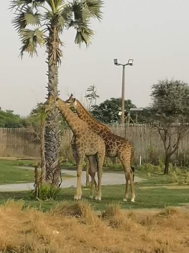 Dubai Safari Park - Дубай Сафари Парк