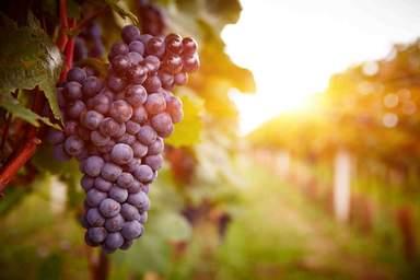 Арени винодельная деревня