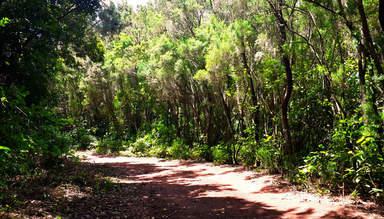 Дорога через леса доледникового периода