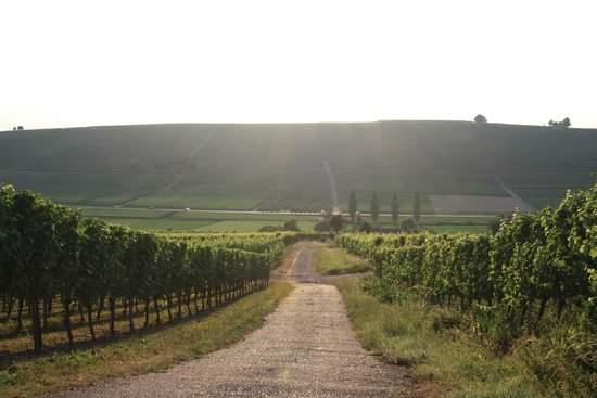 Баденская винная дорога