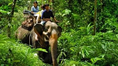 Сафари на слонах по парку Као Лак