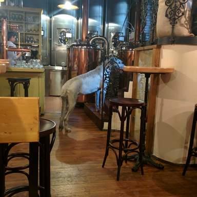 Пивоварня в старом городе. Сторож пивного мира. Чужих не пускает!