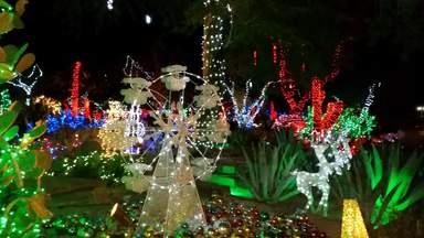 Рождественский Сад Кактусов