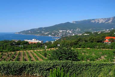 Виноградники на склонах южного берега Крыма