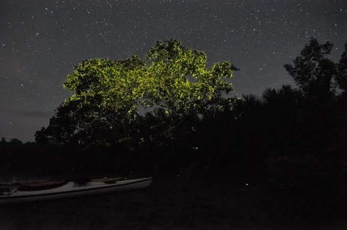 Дерево в светлячках