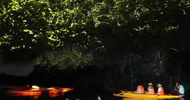 Наблюдение за светлячками с лодок