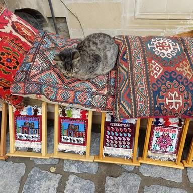 котенок Старого Города, греется на коврах