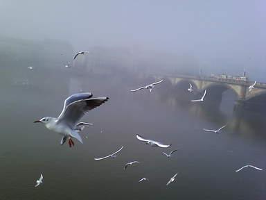 Прага в тумане. Чайки и мост.