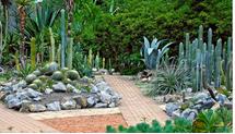 Ботанический Сад Рио