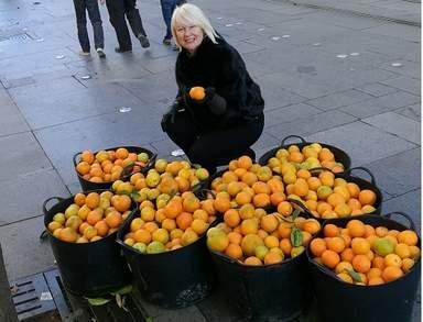 сбор апельсинов в Севилье