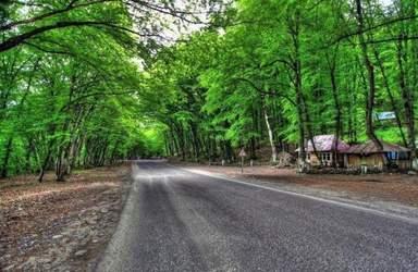Гечрешский лес