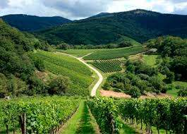 Виноградники по пути к Ивановке