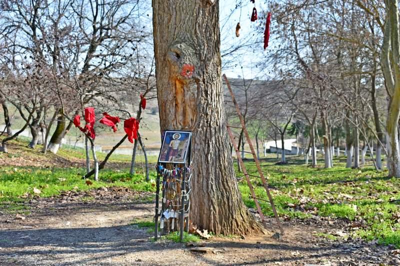 Кровоточащие дерево