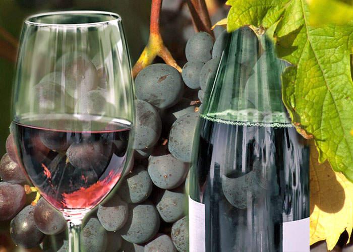 Виноград Москатель