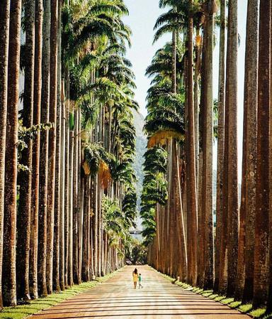 Аллея королевских пальм