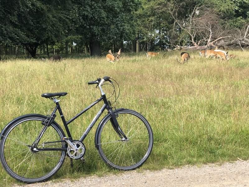Королевский олений парк